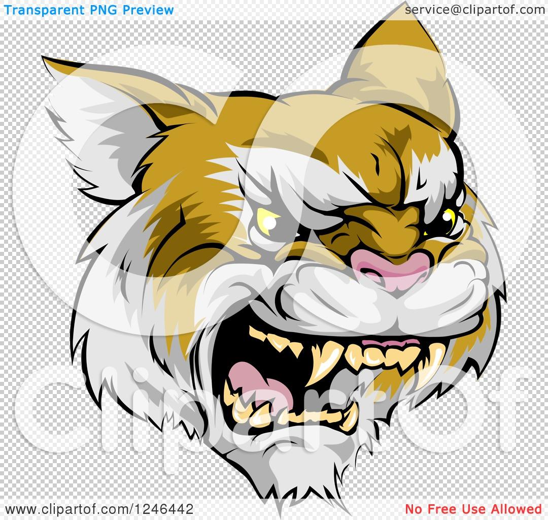 Clipart of a Roaring Aggressive Bobcat Mascot Head - Royalty Free ...