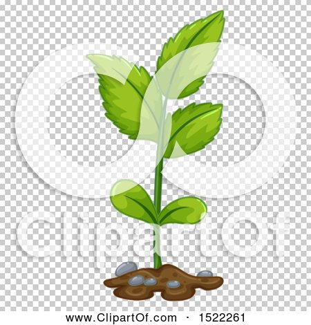 Transparent clip art background preview #COLLC1522261