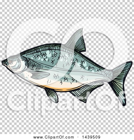 Transparent clip art background preview #COLLC1439509