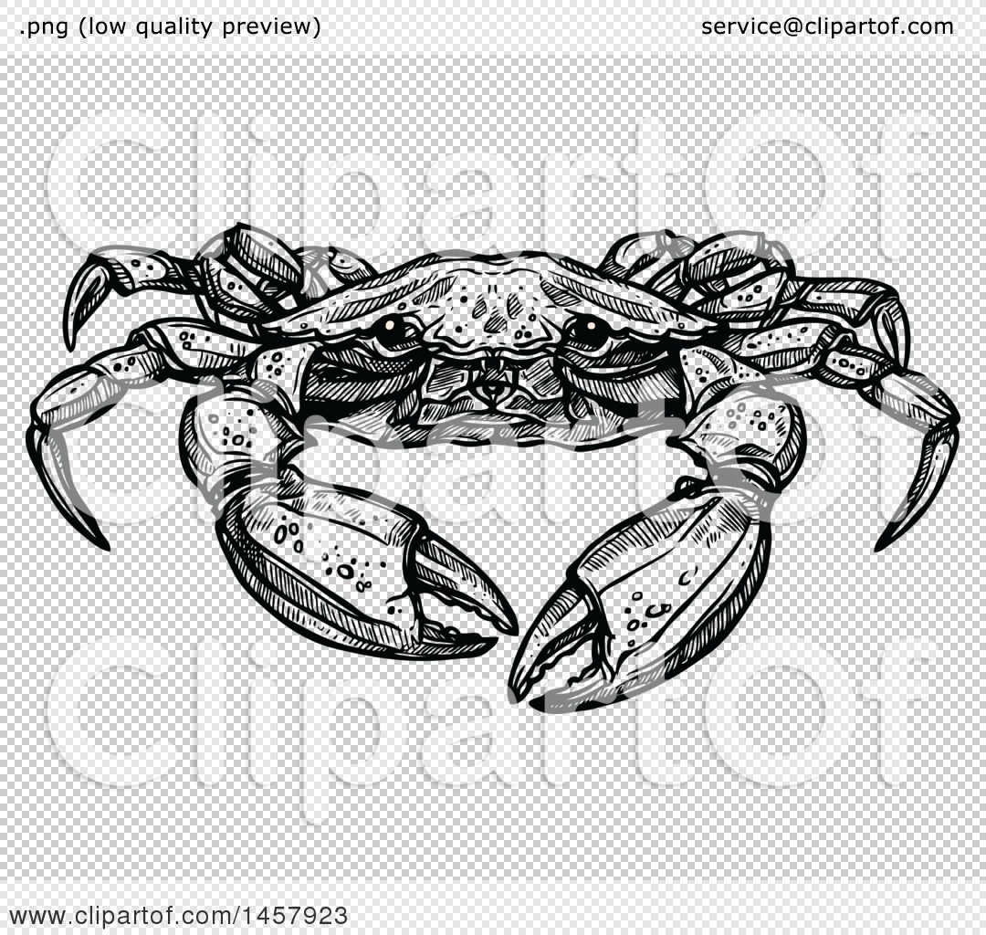 Clipart of a Sketched Black and White Crab - Royalty Free Vector ...