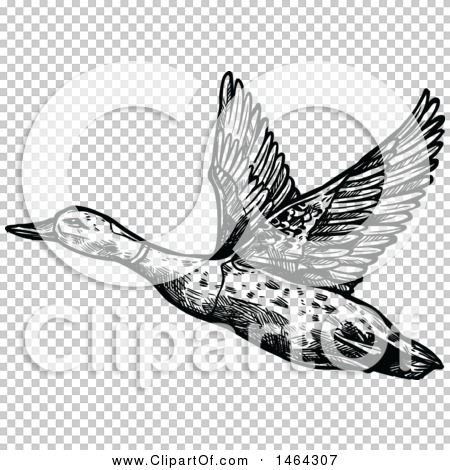 Transparent clip art background preview #COLLC1464307