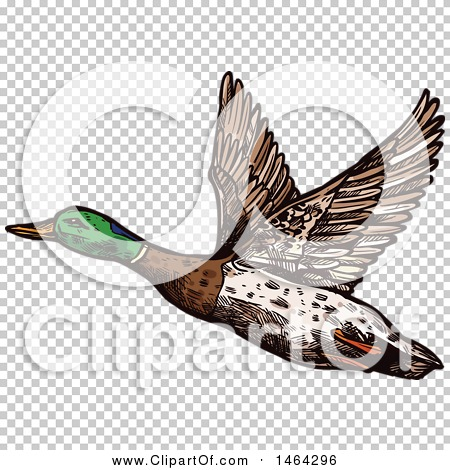 Transparent clip art background preview #COLLC1464296