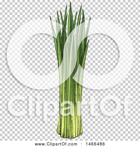 Transparent clip art background preview #COLLC1466486