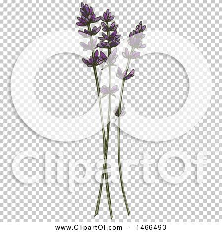 Transparent clip art background preview #COLLC1466493
