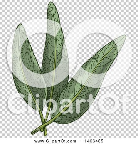 Transparent clip art background preview #COLLC1466485