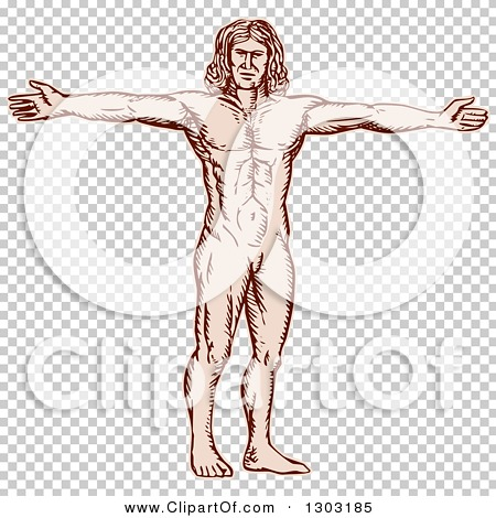 Clipart of a Sketched or Engraved Vitruvian Man - Royalty Free ...