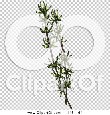 Transparent clip art background preview #COLLC1461164
