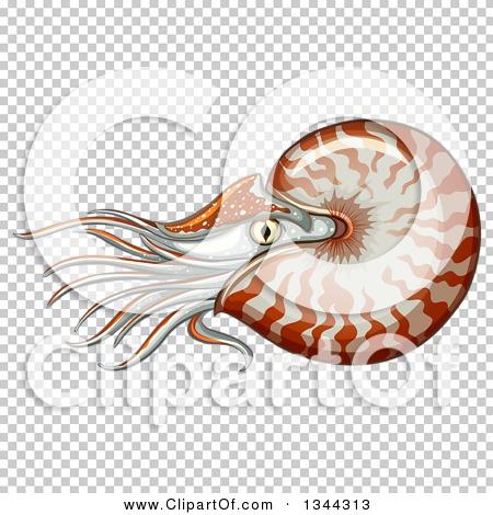 Transparent clip art background preview #COLLC1344313
