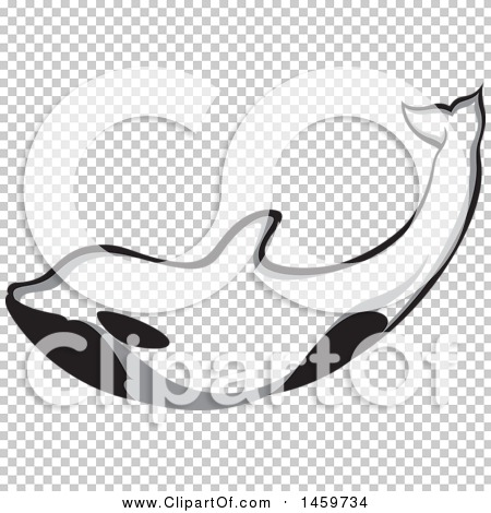 Transparent clip art background preview #COLLC1459734