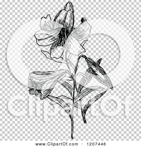 Transparent clip art background preview #COLLC1207446