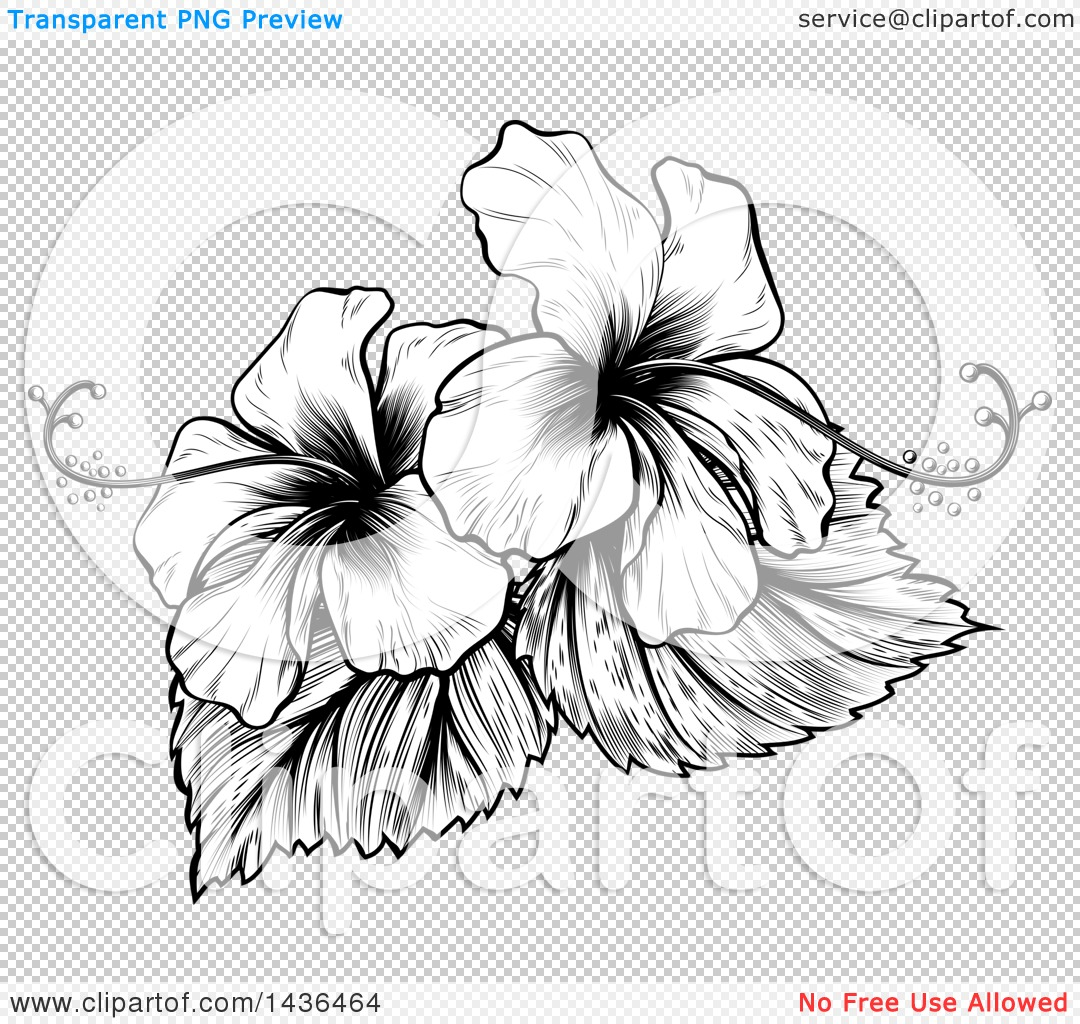 Clipart Of A Vintage Black And White Engraved Or Woodcut Hibiscus