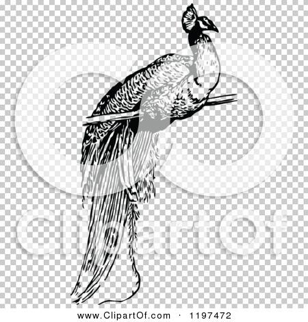 Transparent clip art background preview #COLLC1197472