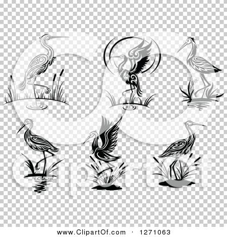 Transparent clip art background preview #COLLC1271063