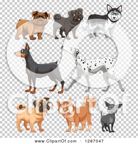 Transparent clip art background preview #COLLC1287047