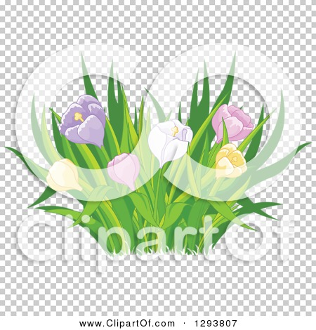 Transparent clip art background preview #COLLC1293807