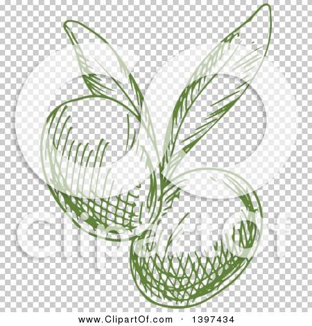 Transparent clip art background preview #COLLC1397434