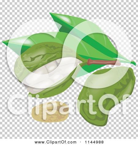 Transparent clip art background preview #COLLC1144988