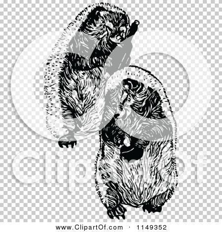 Transparent clip art background preview #COLLC1149352