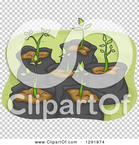 Transparent clip art background preview #COLLC1291874