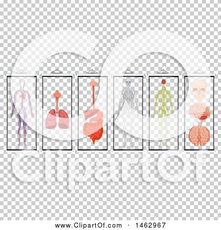 Transparent clip art background preview #COLLC1462967