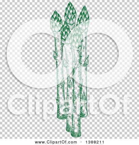 Transparent clip art background preview #COLLC1388211