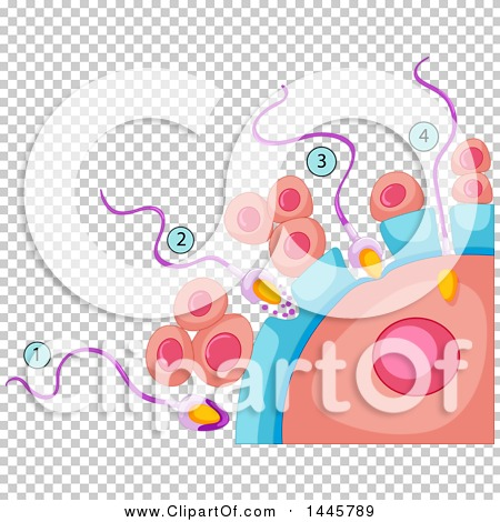 Transparent clip art background preview #COLLC1445789