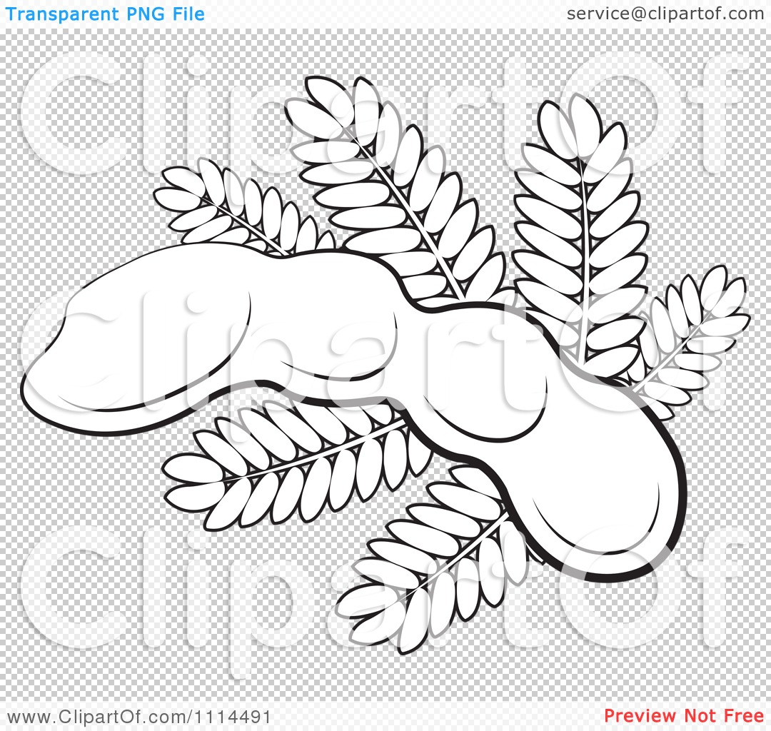 Clipart Outlined Tamarind Fruit And Leaves Royalty Free