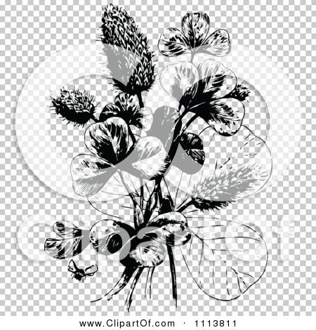 Transparent clip art background preview #COLLC1113811