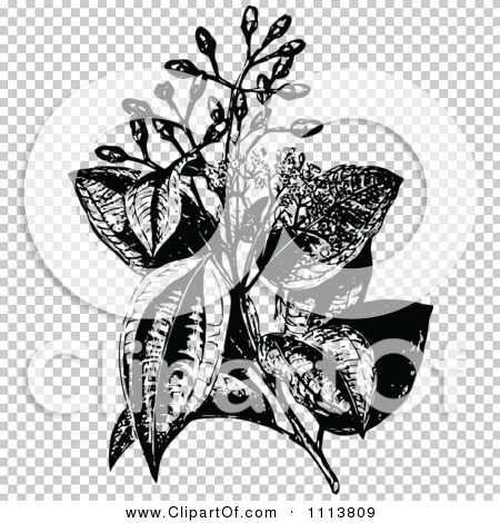 Transparent clip art background preview #COLLC1113809