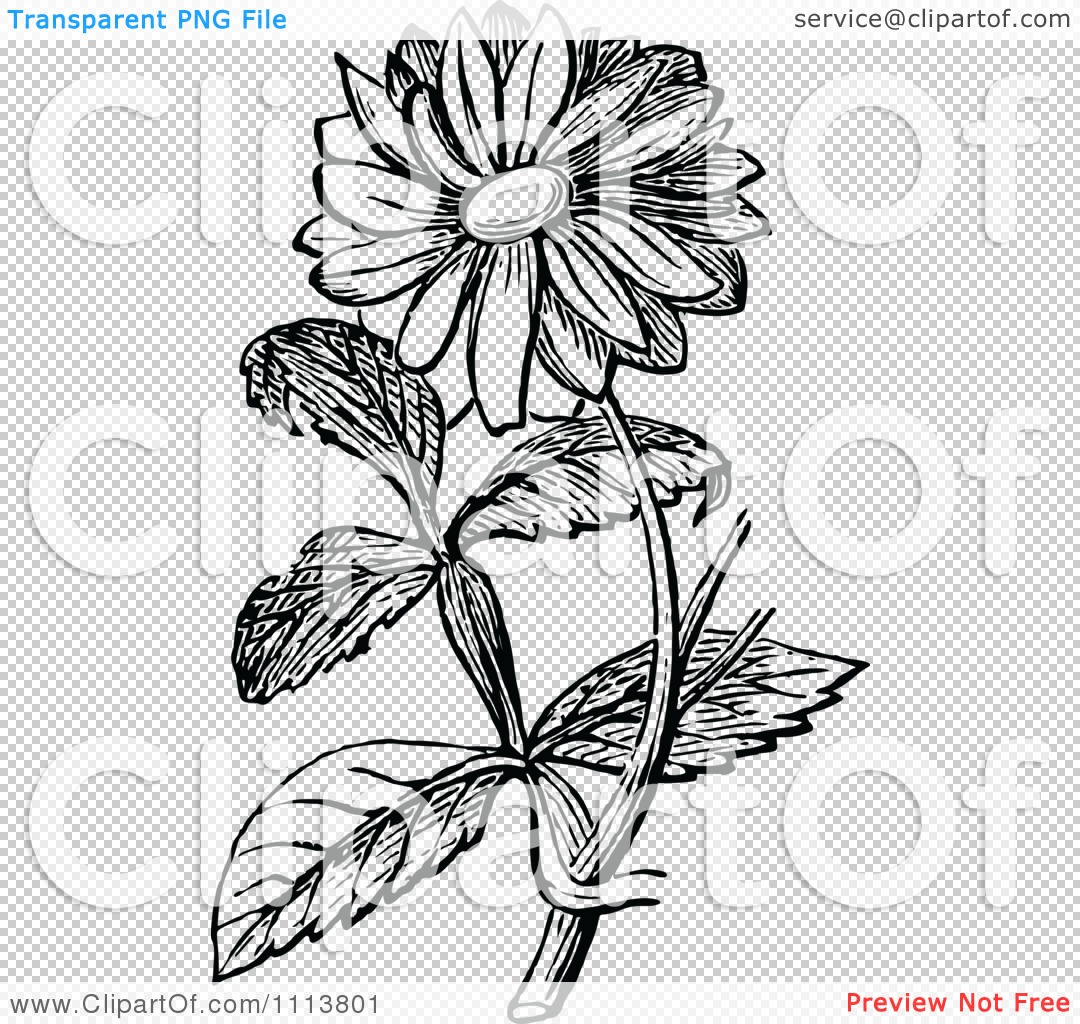 Clipart Retro Black And White Sunflower - Royalty Free ...