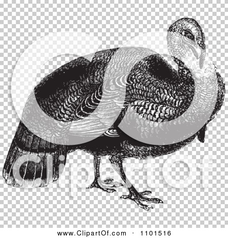 Transparent clip art background preview #COLLC1101516