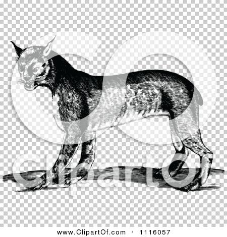 Transparent clip art background preview #COLLC1116057