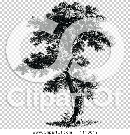 Transparent clip art background preview #COLLC1116019