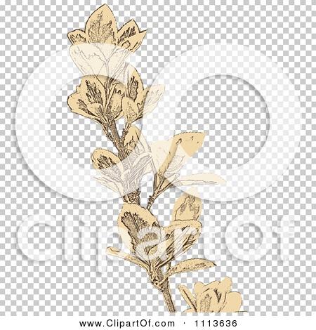 Transparent clip art background preview #COLLC1113636