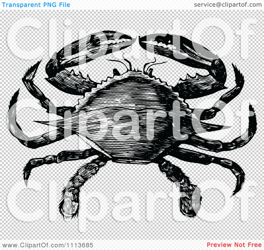 Clipart Vintage Black And White Blue Crab - Royalty Free ... Blue Crab Clipart Black And White