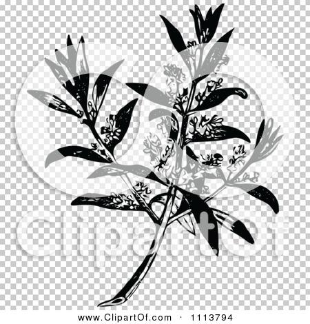 Transparent clip art background preview #COLLC1113794