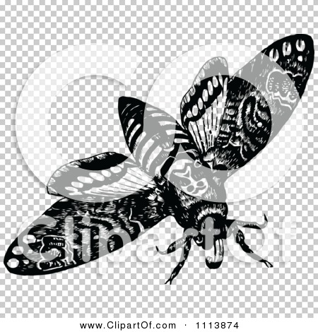 Clipart Vintage Black And White Flying Moth - Royalty Free Vector ...