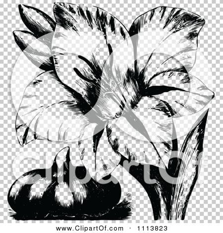 Transparent clip art background preview #COLLC1113823