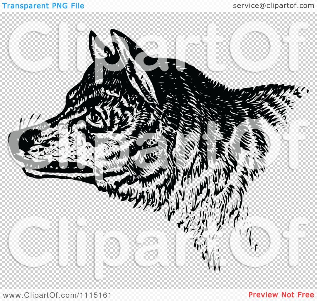 Clipart vintage black and white growling wolf royalty free vector