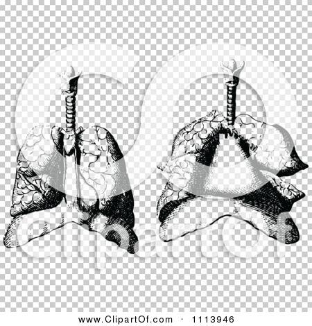 Transparent clip art background preview #COLLC1113946