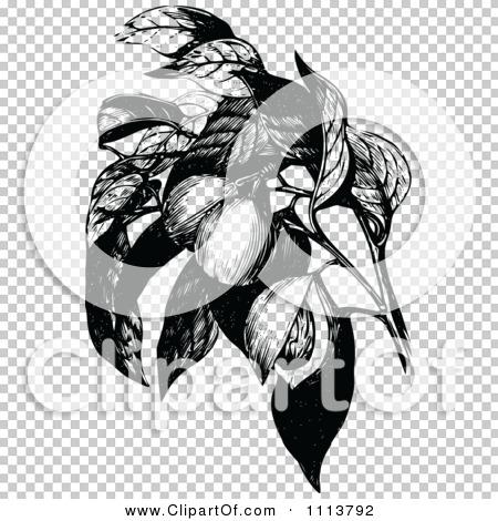 Transparent clip art background preview #COLLC1113792