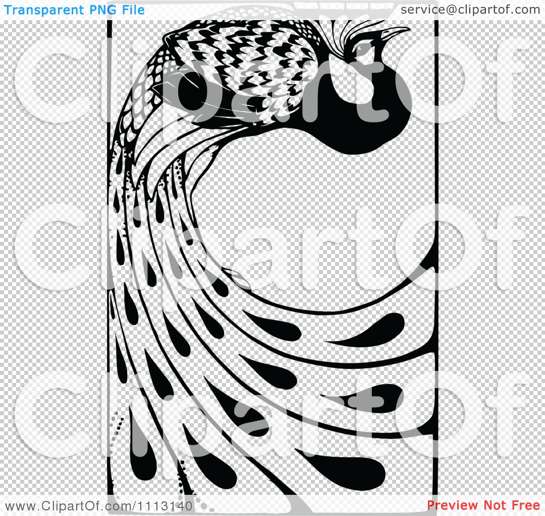 Black And White Peacock Feather Design Black And White Peacock Design