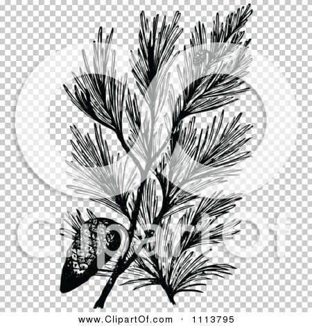 Transparent clip art background preview #COLLC1113795