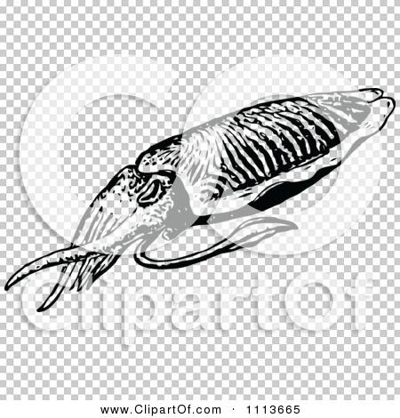 Transparent clip art background preview #COLLC1113665