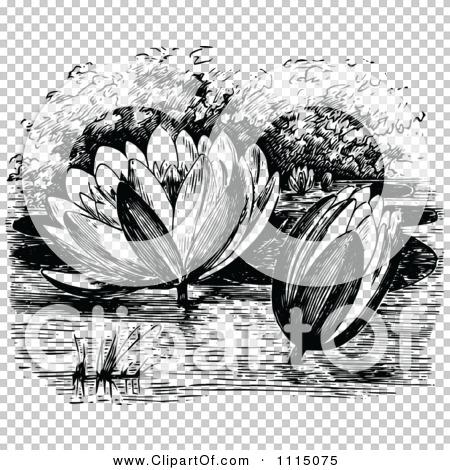 Transparent clip art background preview #COLLC1115075