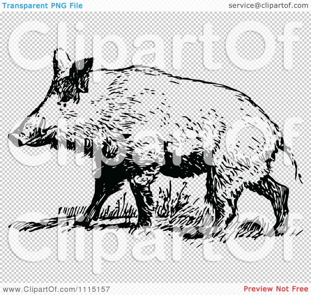 Clipart Vintage Black And White Wild Hog - Royalty Free Vector ...