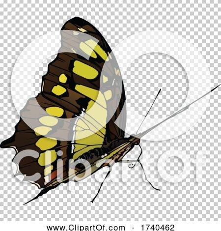 Transparent clip art background preview #COLLC1740462