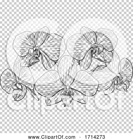 Transparent clip art background preview #COLLC1714273