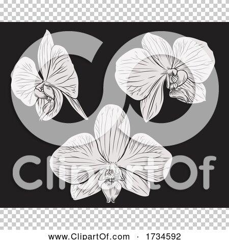 Transparent clip art background preview #COLLC1734592