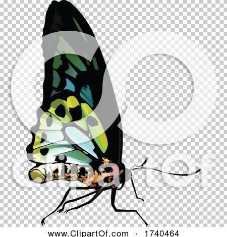 Transparent clip art background preview #COLLC1740464